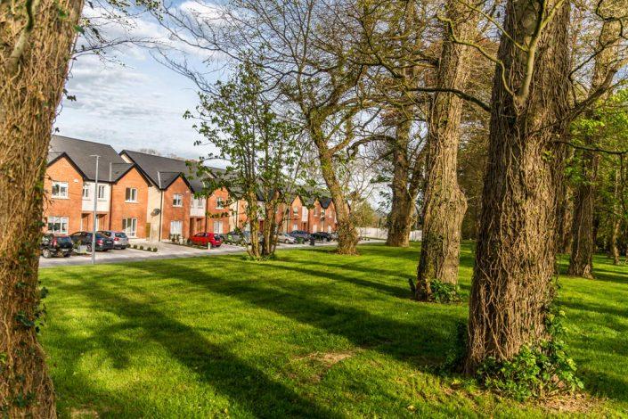 Mature Ash Trees surrounding Maydenhayes